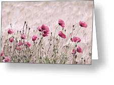 Pink Poppy Field  Greeting Card
