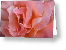 Rose 02 Greeting Card