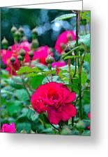 Rose 132 Greeting Card