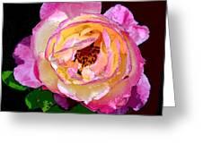 Rose 136 Greeting Card