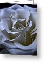 Rose 156 Greeting Card