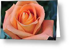 Rose 33 Greeting Card