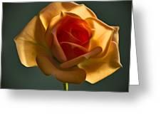 Rose-9 Greeting Card