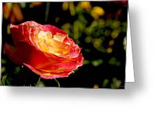 Rose After A Rain Shower Greeting Card