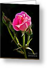 Rose And Buds Greeting Card