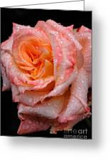 Rose And Raindrops On Black Greeting Card