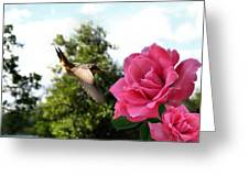 Rose And Rufous Greeting Card