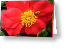 Rose And Visitor Greeting Card