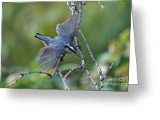 Rose Breasted Nuthatch Flying Greeting Card