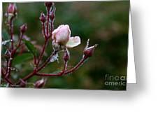 Rose Candelabra Greeting Card