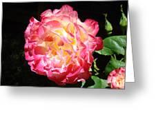 Rose Floral Fine Art Prints Pink Roses Flower Greeting Card