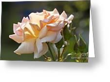 Rose Flower Series 15 Greeting Card