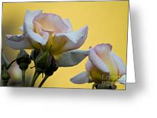 Rose Flower Series 3 Greeting Card