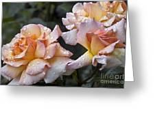 Rose Flower Series 7 Greeting Card