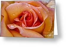 Rose Flower Series 8 Greeting Card