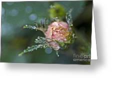 Rose Flower Series 9 Greeting Card