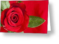 Rose Flower Wet 1 B Greeting Card