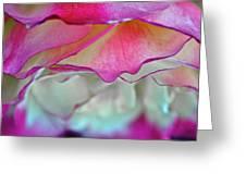 Rose Folds II Greeting Card