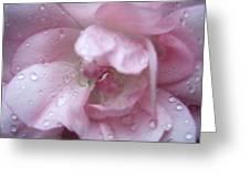 Rose II Greeting Card