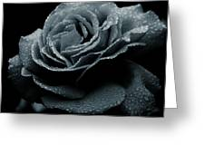 Rose In The Rain Greeting Card