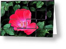 Rose Interrupted Greeting Card