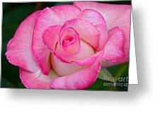 Rose Macro Greeting Card