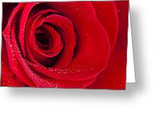 Rose Macro Wet 1 C Greeting Card
