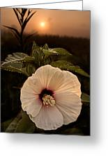 Rose Mallow Greeting Card