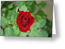 Rose Mist Original  Greeting Card