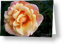 Rose Of Many Pastels Greeting Card