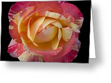 Rose On Black Greeting Card