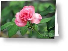 Rose Parade Greeting Card