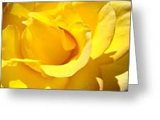 Rose Petal Flower Yellow Colorful Rose Floral Baslee Greeting Card
