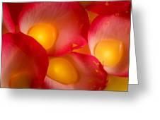 Rose Pod Greeting Card