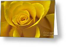 Rose Poetry Greeting Card