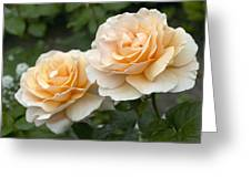 Rose Rosa Sp Just Joey Variety Flowers Greeting Card