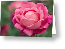 Rose (rosa 'star Of The Nile') Greeting Card
