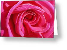 Rose Rose Greeting Card
