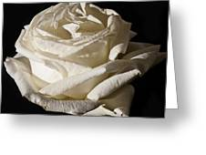 Rose Silver Anniversary Greeting Card