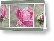 Rose Triptych 11 Greeting Card