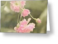 Rose Vine Greeting Card