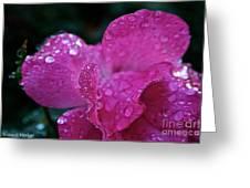 Rose Water Beads Greeting Card