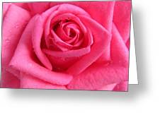 Rose With Droplets In Large-size Greeting Card