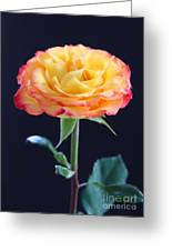 Rose3 Greeting Card