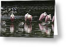Roseate Reflections - Spoonbill Nature Scene Greeting Card