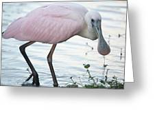 Roseate Spoonbill 3 Greeting Card