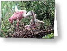 Roseate Spoonbill Nest Greeting Card