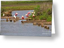 Roseate Spoonbills And Snowy Egrets Greeting Card