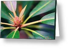 Rosebay Rhododendron Bud Greeting Card