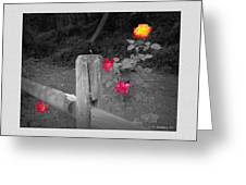 Roses And Fence Greeting Card